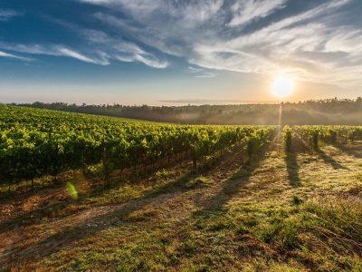 Le succès des marques viticoles en France